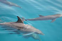 maison des dauphins hurghada