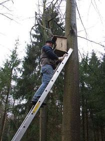 G. Dmitriev beim Anbringen eines Waldkauzkastens Foto: H. Lobensteiner