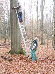 Nistkasten-AG bei der Arbeit im Schlosspark Rastede