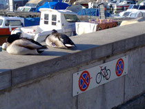 Duck parking only- J.Kwast