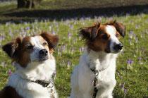 Bailey und Benaja im Park
