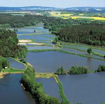Teichpfanne Tirschenreuth Erlebniswochen Fisch