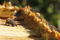 la propolis et l'aloe vera font des miracles
