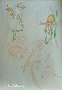 Dibujo preparatorio de flores para 'Futari'