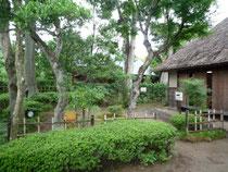 旧但馬家の前庭