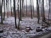 verschneiter Waldboden