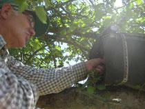 Franz an einer Steinkauzröhre