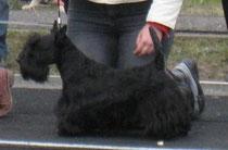 01.12.2007, вл.Юлия Гошко (Беларусь)