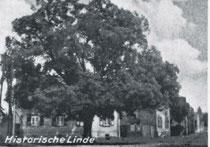 Historische Linde am Bahnhofsvorplatz