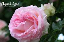 AquaLightプロフ写真
