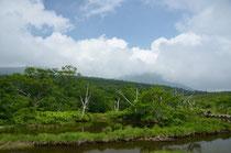ニッコウキスゲの湿原