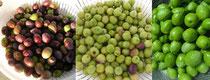 果実の収穫