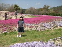 好きなのはうす紫の芝桜