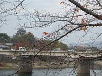 帰り道 12月の桜の木に残る紅葉