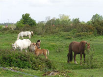 Picardie > Baie de Somme > Baie d'Authie > Marais de Larronville APPB  >  www.gitesdumarquenterre.com