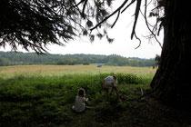récolte du foin à la ferme Bio du Masbareau en Limousin Haute-Vienne-Nouvelle-Aquitaine