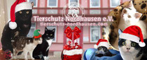 Weihnachtszeit im Katzenhaus
