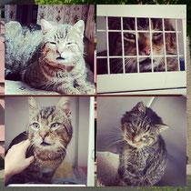 Das Leid der Streuner und Dorfkatzen