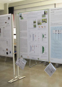 Niinas poster at PC XIII/IOPC IX 2012