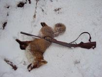 erfolgreiche Fuchsjagd