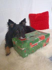 Mira mit ihrer Spendenbox <3
