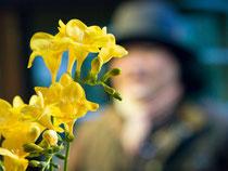 二月の花 フリージア
