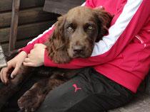 Hundepension Hund Ferien Hotel Unterbringung Hund Pension Hundehotel Urlaub Hund Hund Betreuung Wochenende