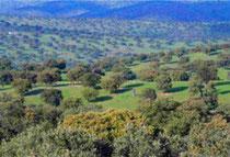 地中海性森林地帯