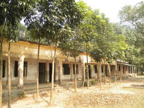 Trees giving shade to the classrooms