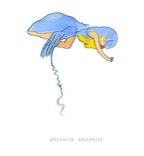 「physalia physalis(かつおのえぼし展)」
