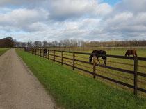All die schönen Pferde....