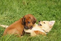 Hundetraining mit Herz und Verstand by Andrea und Fritz