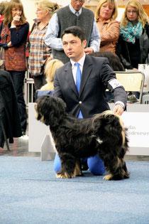 Tibet Terrier_Peter Künzel Oelde