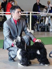 Peter Künzel Tibet Terrier Adominos ToJo´s Apeel at DW