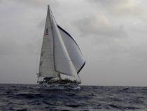 Delphin auf dem Weg über den Atlantik