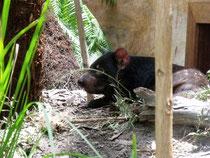 im Land des Tasmanischen Teufels