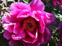 auf dem Bild ist eine Rose