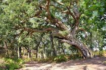 L'arbre, une énergie protectrice