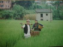 水田のネワール族