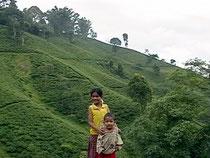 茶畑を背に姉と弟