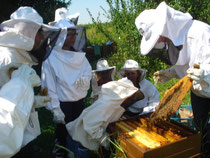 abeille ruche et apiculture ecomusee