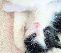Dass aus diesem Katzenkind keine weitere verwilderte Katze wird, dafür tragen die Mitglieder des Vereins Köthener Tierhilfe e. V. Sorge.