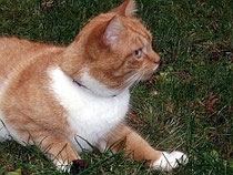Foto einer pirschenden Katze