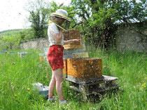 Des abeilles très douces.