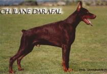 Ilane Darafal