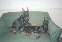 Bess e Tristan