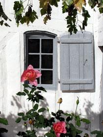"""Roses devant votre écogîte-biogîte """"Lartigue"""" dans les Landes"""