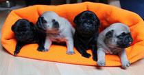 Murphy, Norbert, Campino, Claas