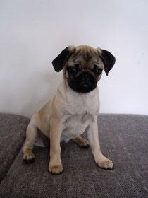 Penny, ca. 2 Monate