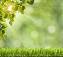Nützliche Informationen rund um Gartenpflege, Gartengestaltung von Green Fairway Burgwedel, Wettmar, Hannover